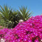 flowershower Quinta Al Gharb